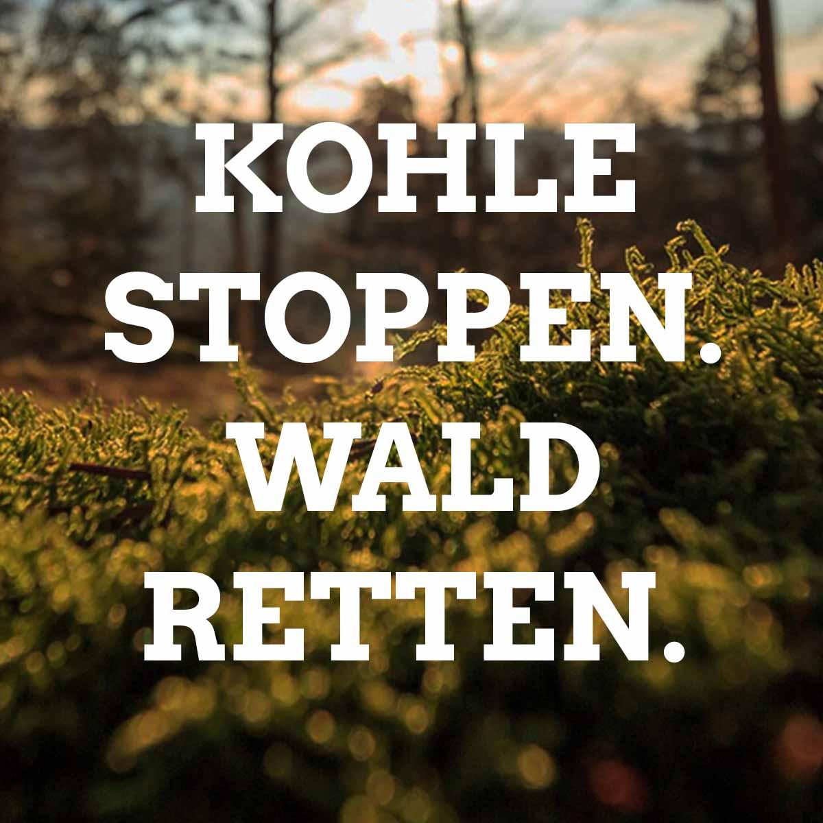 Warum die Landesregierung und RWE den 12.000 Jahre alten Hambacher Wald abholzen wollen