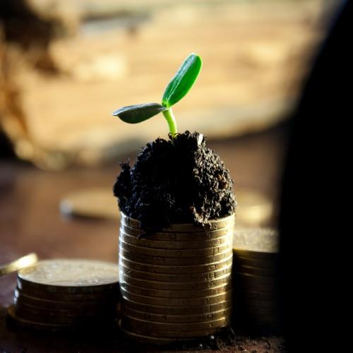 Hilf mit, dass Grün wächst