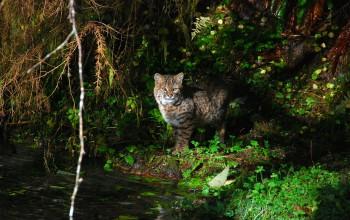 Katze im Wald